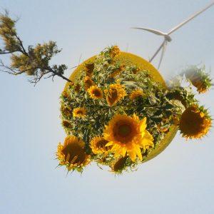 Rund_Sonnenblumen 1